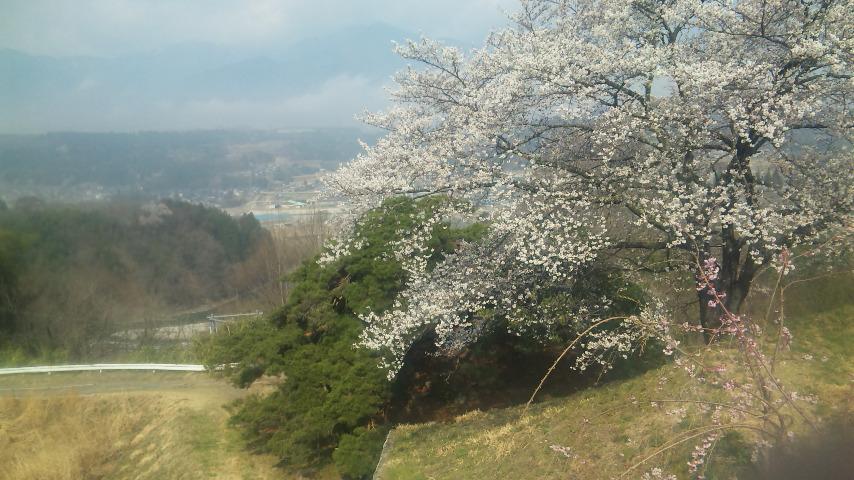 中央アルプスと天龍川と桜と松と