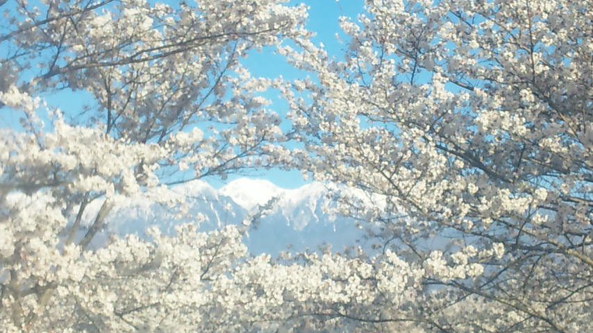 桜につつまれた山々